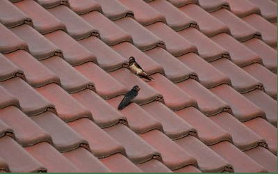 Een geisoleer dak